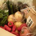 九州の野菜ってやっぱおいしいなーってほわぁとしたので、西都の農家さんを見学させてもらった!