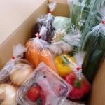 【速報】 やお九州の野菜セット「やおパック」をお試し中です♪